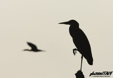 Silhouette dell'Airone scelta come Images Of The Week