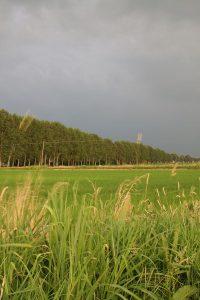 Nubi sui campi di riso