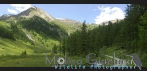 camminando in montagna  (Valle Soana)