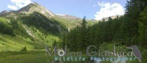 Camminando in montagna (Val Soana)