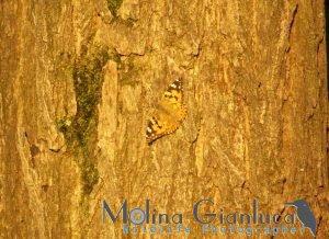 farfalla su tronco