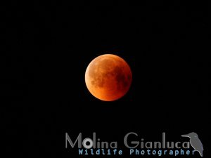 Eclissi Totale di Luna 28 Luglio 2018 elab rid
